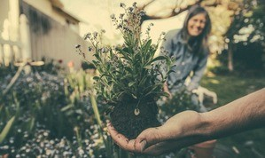 Mindfulness Gardening and Planting
