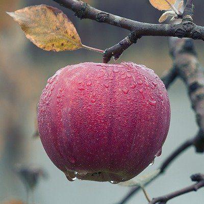 Choose Your Organic Garden's Plants